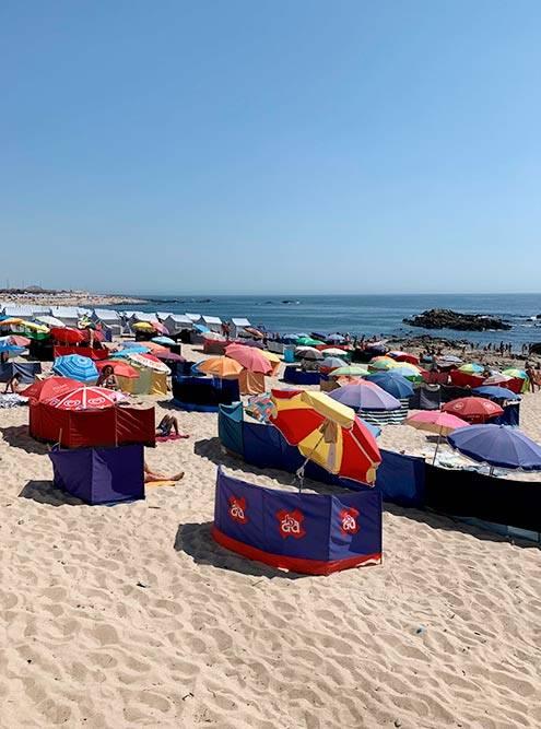 Пляж на севере Португалии. С помощью таких заборов люди прячутся от ветра и песка
