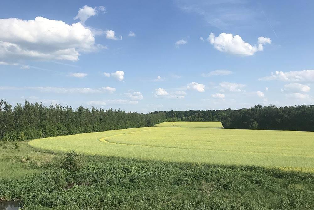 Уже в 150км от Москвы природа завораживает красотой