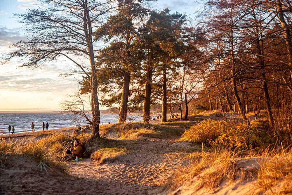 Самое красивое зрелище в «Комаровском береге» — это закат на Финском заливе. Осенью и зимой солнце садится рано. Чтобы увидеть закат, не нужно ждать позднего вечера