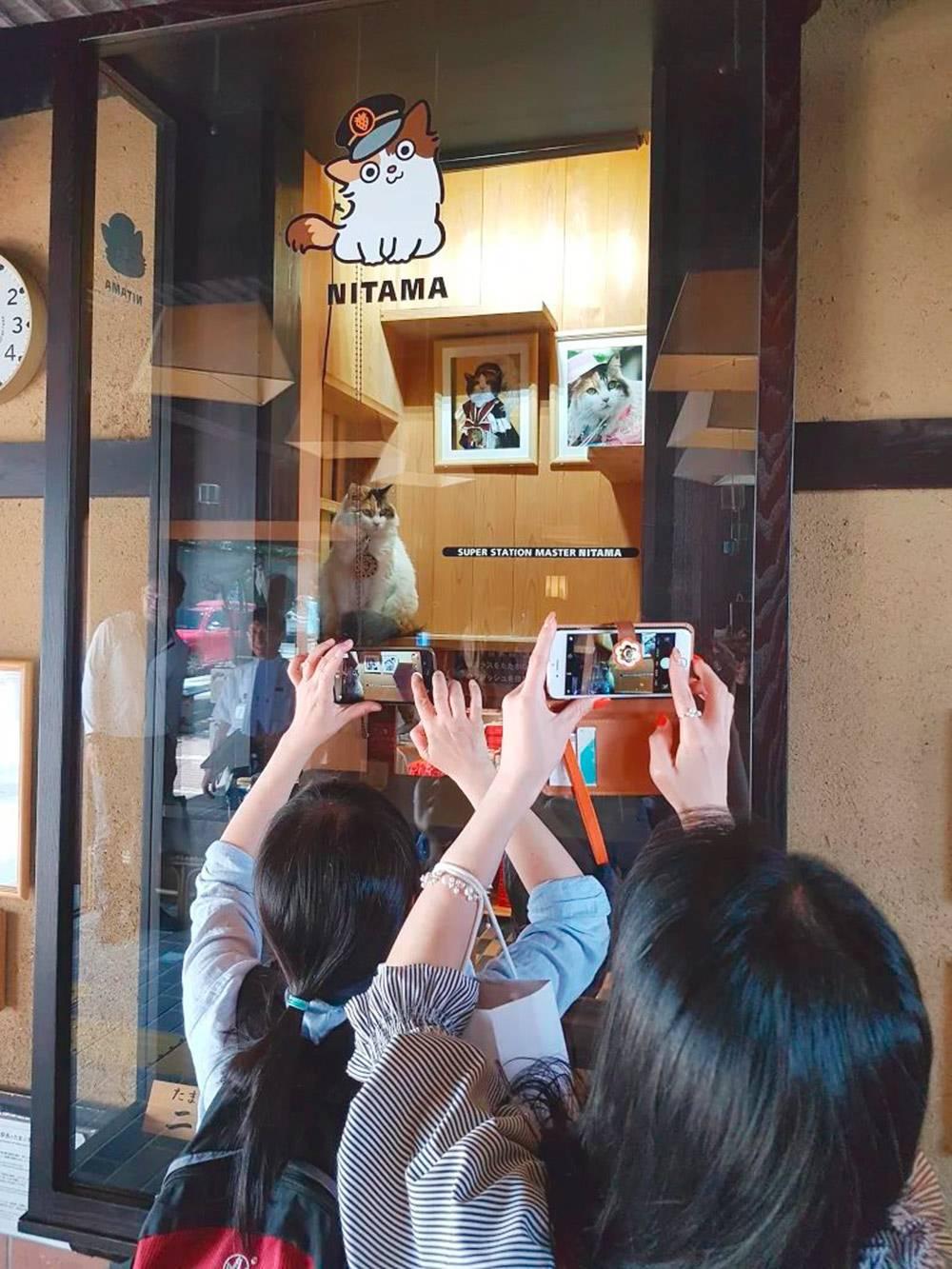Пару лет назад Катя была в Японии. Там она нашла железнодорожную станцию Киниси, на которой смотритель — кот