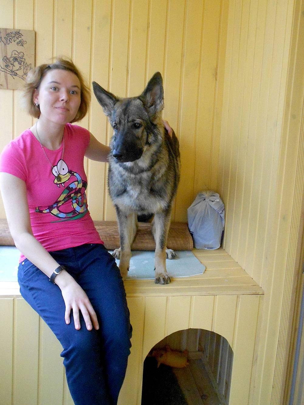 На лоджии сделали будку — «кабинет» для собаки. Сыщик она или нет?