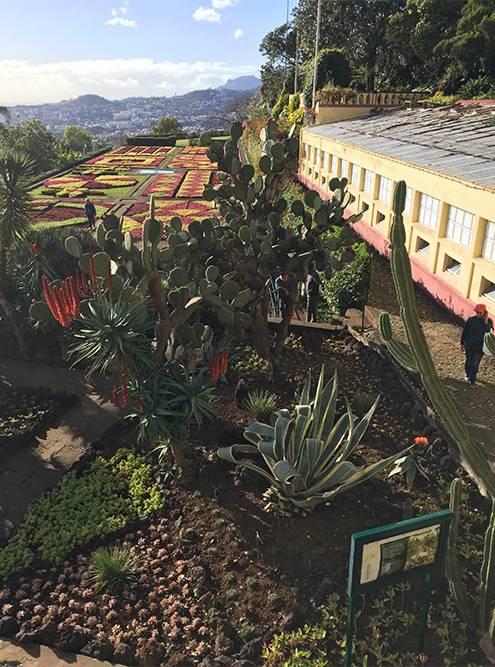 В ботаническом саду рядом с парком «Монте» из цветов выложены огромные клумбы, напоминающие ковры. Вход в сад стоит 6€
