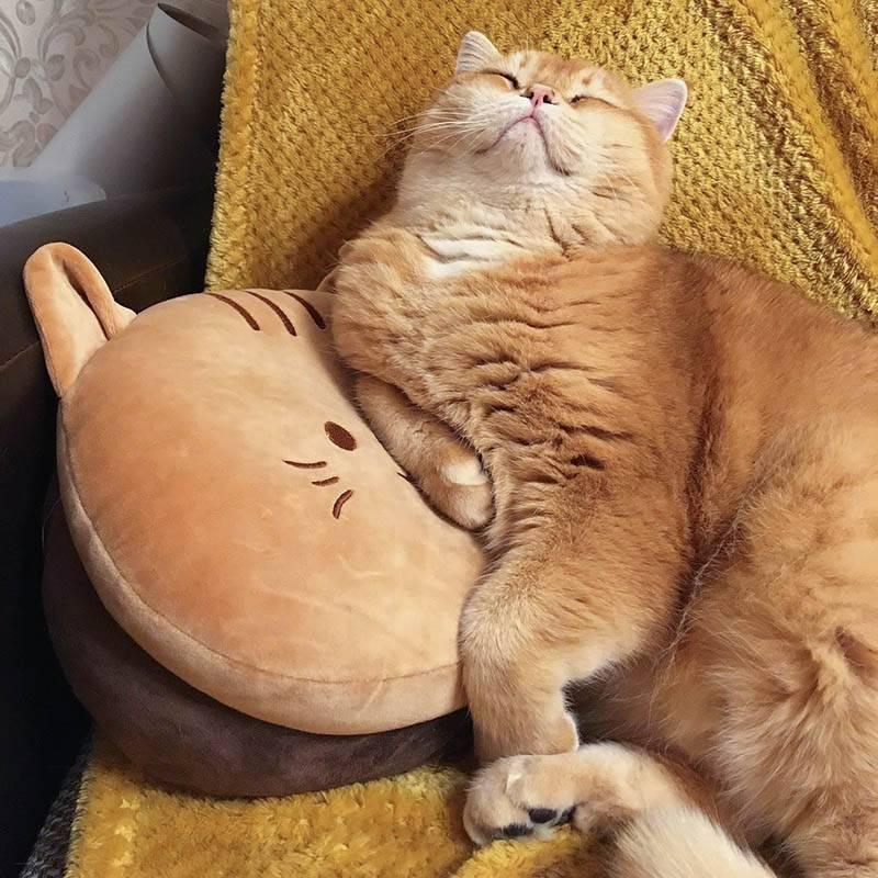 Наш кот Микус. Назван в честь навигационной точки в Челябинской области