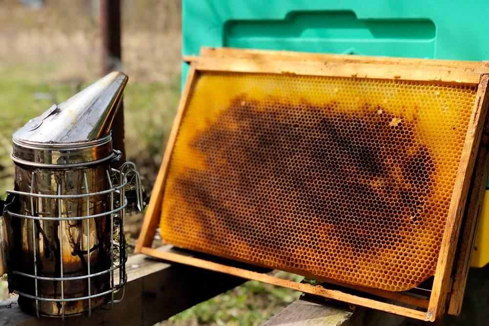 Рамка с сушью — то есть та, в которой пчелы уже успели отстроить соты, но безмеда внутри. Такую рамку удобно ставить длярасширения пчелиной семьи. Матка может сразу откладывать яйца в соты