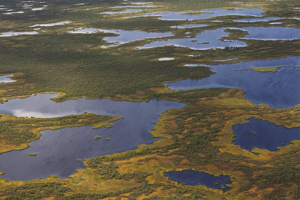 За эти виды и огромные запасы пресной воды Васюганские болота называют сибирской Амазонией. Источник: ressormat / Shutterstock