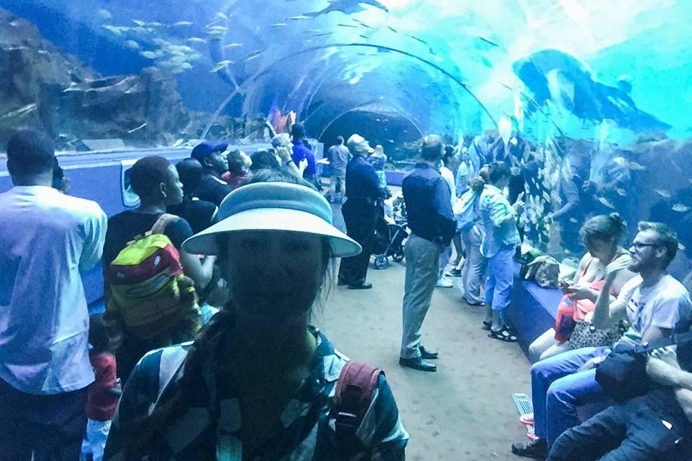 Посетители проходят через гигантскую трубу-аквариум