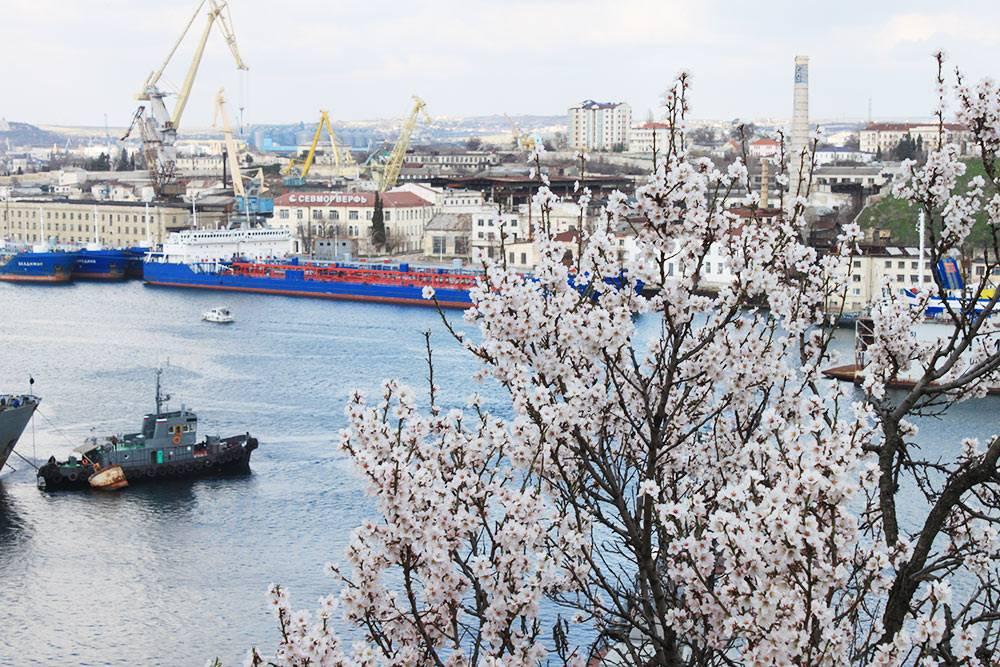 Цветущие деревья на фоне военных кораблей — мой любимый вид в Севастополе