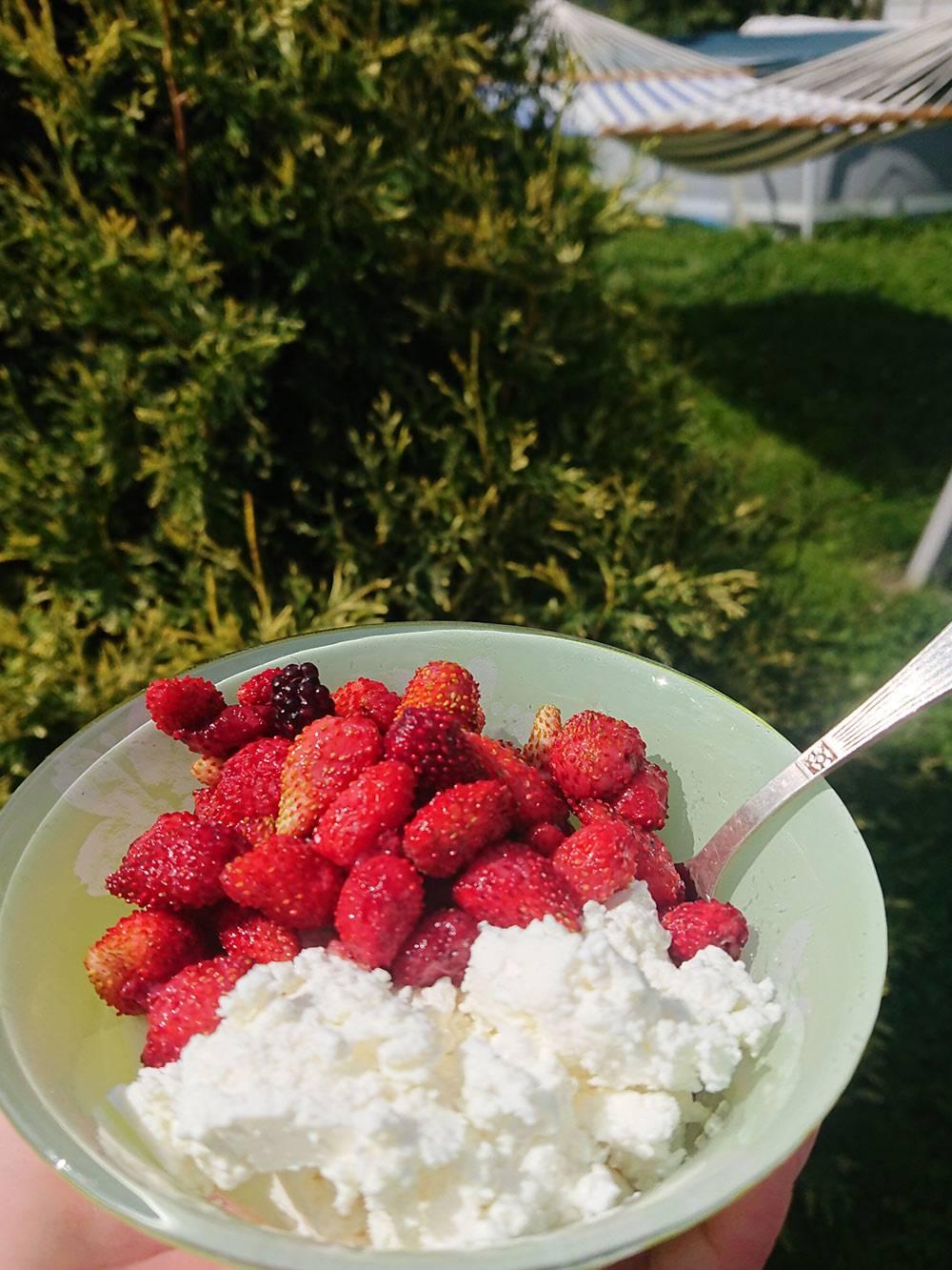 Творог с дачными ягодами на время отвлекает меня от блинчиков