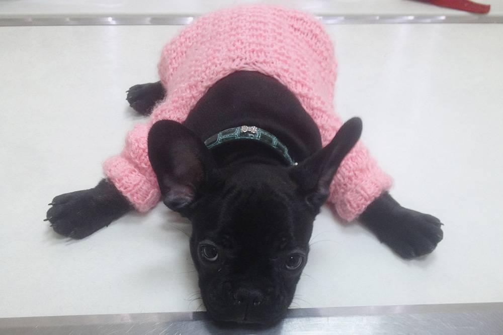 Первое время Бижу гуляла в розовом свитере. Жена связала его для&nbsp;куклы еще в школе. В&nbsp;магазине похожий стоил 300<span class=ruble>Р</span>