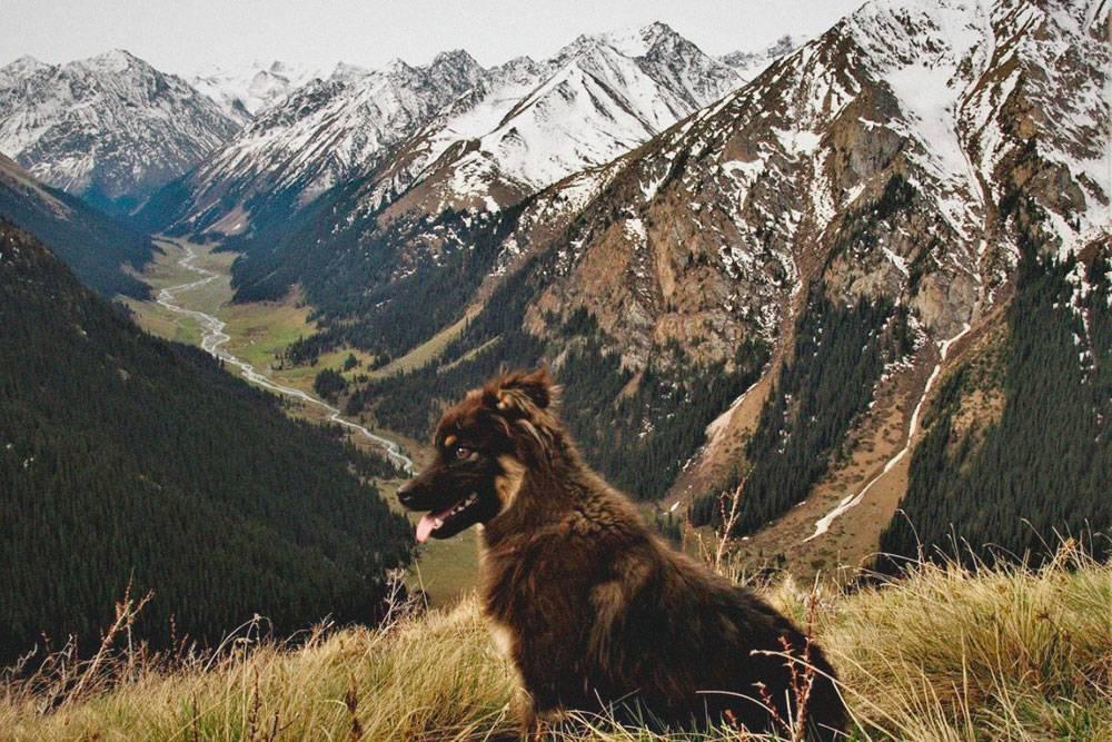 Многие горы — пятитысячники. То есть они выше, чемАльпы