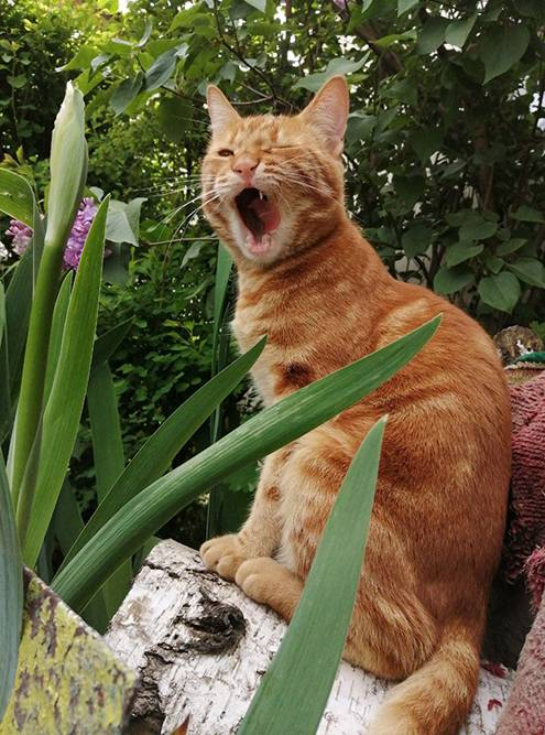Мамин кот Александр