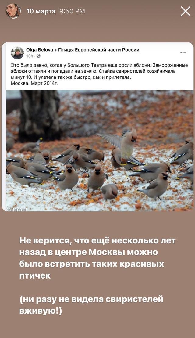 С тех пор как я вступила вгруппу «Птицы Европейской части России», мне начала нравиться моя лента в«Фейсбуке»