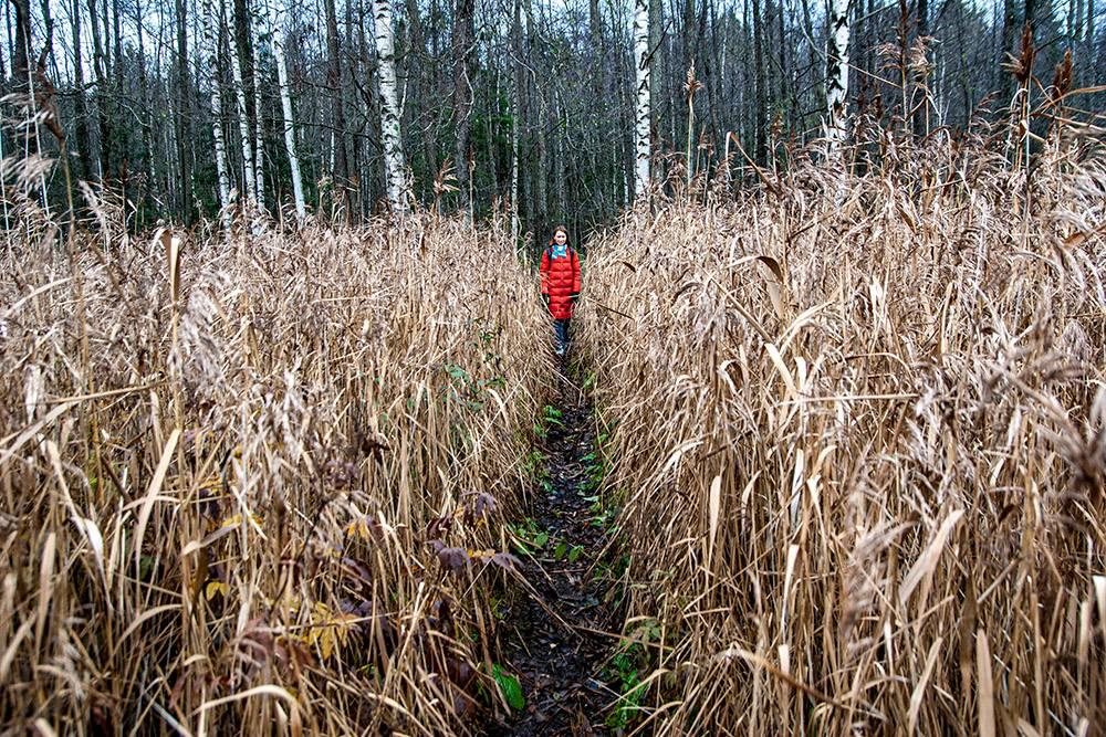 На удивление, в этих зарослях тропа суше, чем в лесу