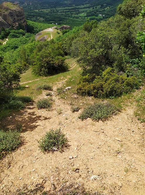 Путь к Ипапанти несложный — мало подъемов, не нужно заходить далеко в лес, тропа гладкая. По дороге мы встретили черепаху — она видна на фото