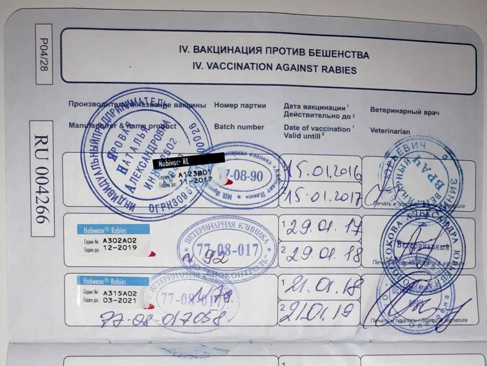 Данные о прививках от бешенства в паспорте Бусинки. Врач отметил название лекарства, дату вакцины и заверил печатью