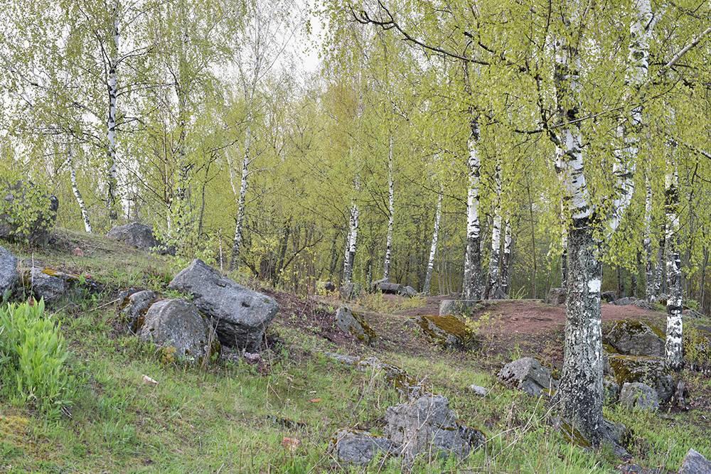 В Английском парке нет оборудованных дорожек, поэтому там можно гулять как в лесу. Источник:IGOR SKORIKOV / Shutterstock