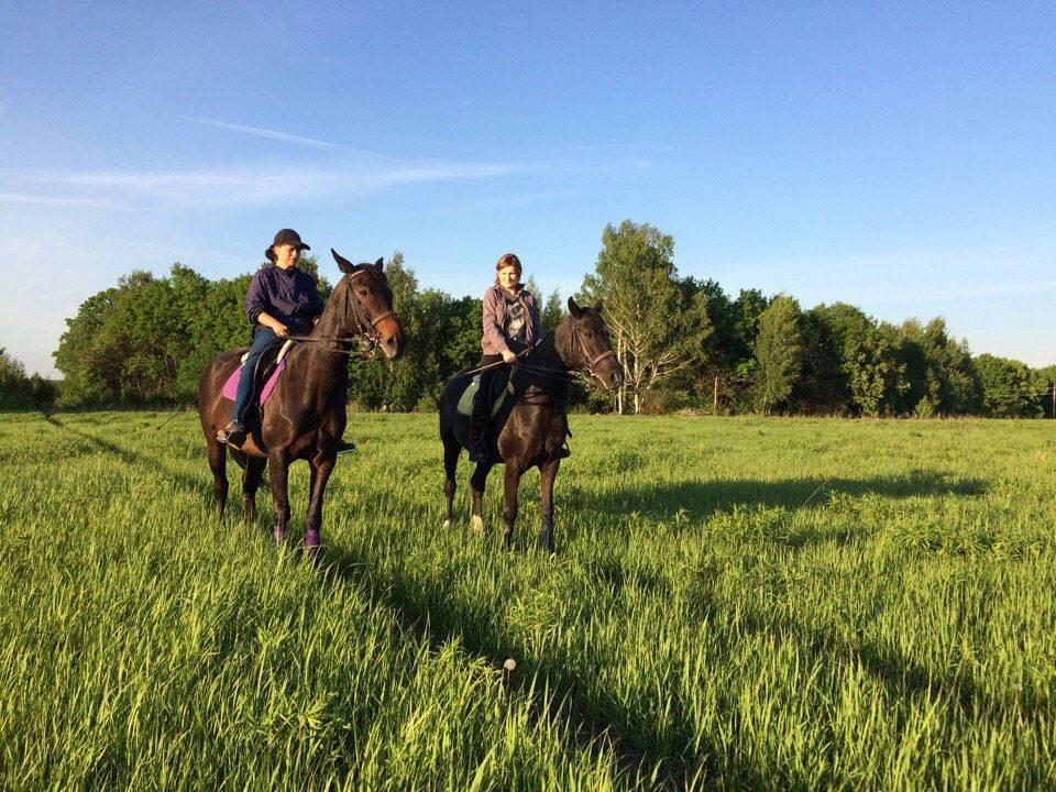 Лошадь тренера — главная, высокоранговая, вторая лошадь подчиняется ей