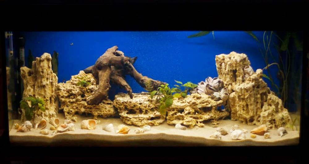 Подготовленный аквариум дляцихлид. Камни занзибар, коряги мопани, ракушки идаже растения. Источник: cichlids.ru