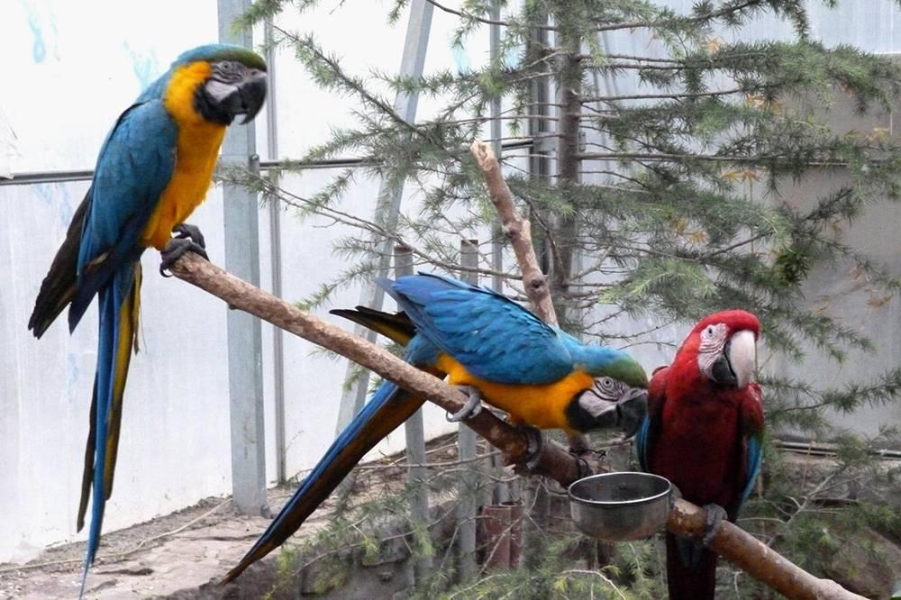 В саду полно разноцветных попугаев