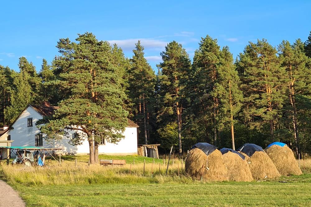 Это крестьянско-фермерское хозяйство «Демидовский», на острове Олений рядом с озером Вуокса недалеко от Петербурга