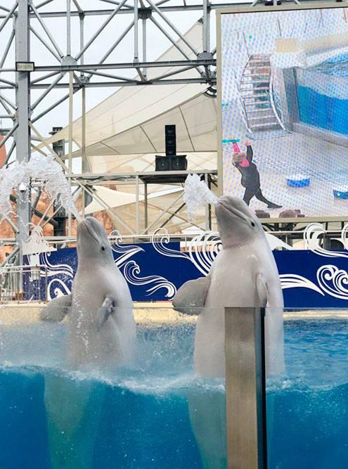 Представление в дельфинарии. В программе были трюки от дельфинов и белух, а также уморительный танец от моржа подМайкла Джексона. Хотя представление рассчитано на детей, мы тоже посмеялись