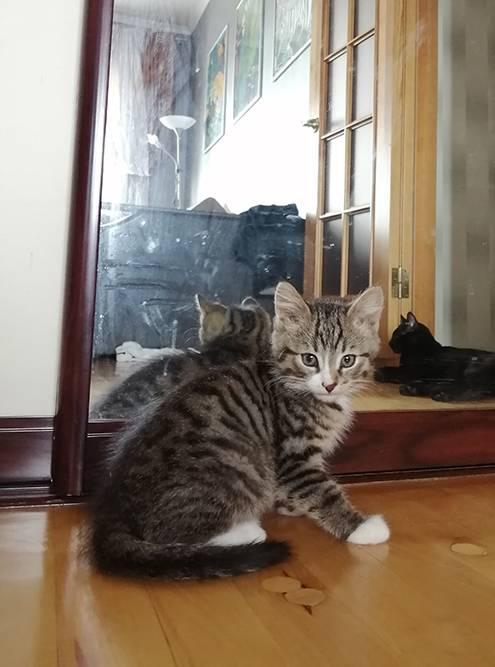 Полосатый котенок — Бигус. Я подобрала его на улице в мае 2021 года