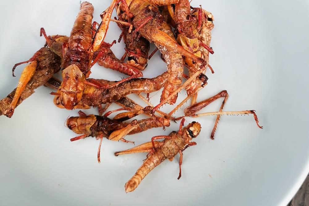 В интернете пишут, что одной плошки насекомых достаточно, чтобы наесться. Источник: Shutterstock