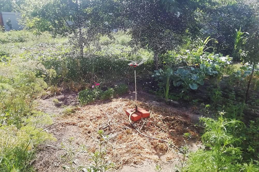 Я купила дождеватель на высокой ножке, чтобы он был выше растений. В зависимости от напора воды он поливал круг диаметром до 5—6 метров, но иногда вообще останавливался