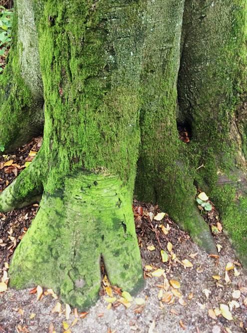 Не знаю насчет травы, но мох в Дюссельдорфе точно зеленее