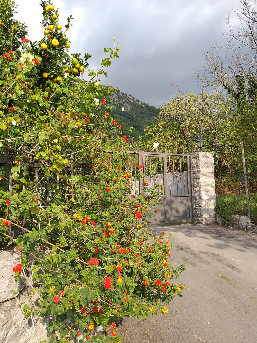 Начало ноября в Черногории: тепло, много зелени, созревают цитрусовые
