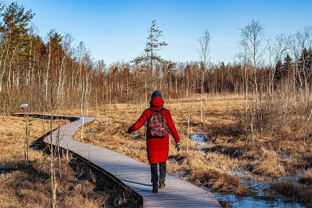 Зимой болото промерзает, можно сойти с тропы и углубиться в него. Летом покидать тропу опасно: есть риск провалиться в трясину и замочить ноги