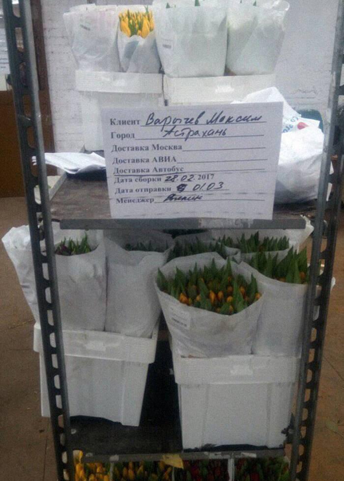 Тюльпаны перед отправкой