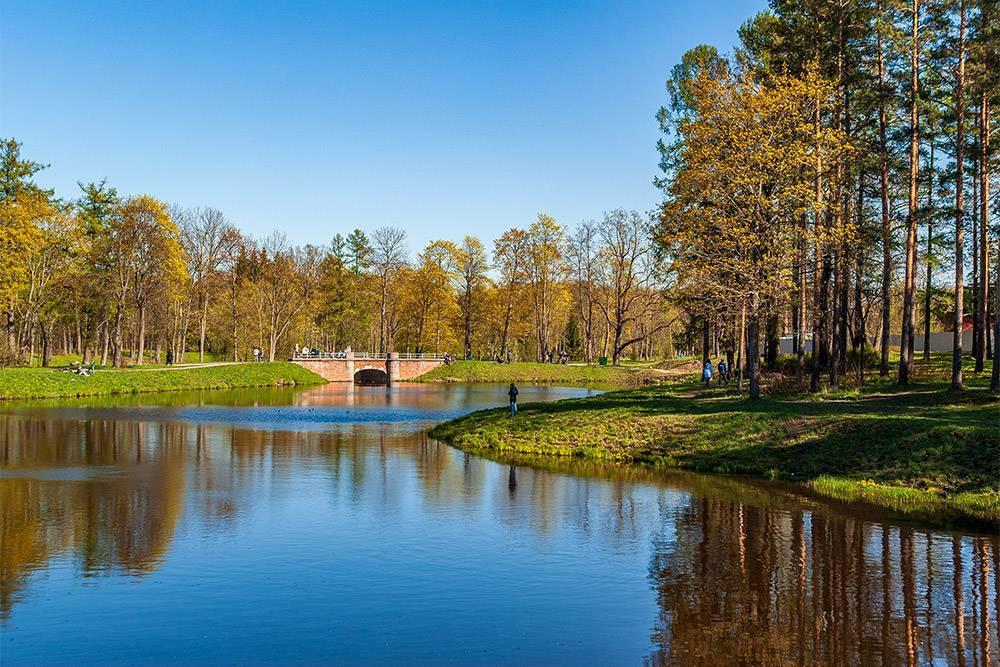 На берегу пруда в Баболовском парке устраивают пикники