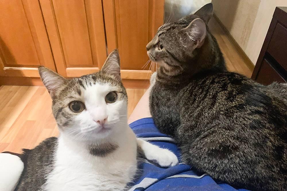 В течение рабочего дня котики приходят ко мне помурчать, а иногда — помешать, залезая на стол и клавиатуру