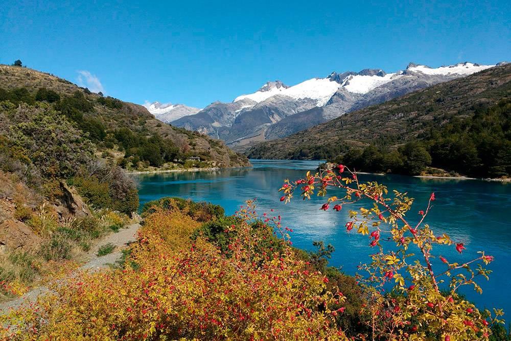 Типичный пейзаж чилийской Патагонии. Здесь растет много турецкого шиповника