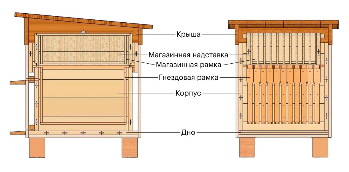Вот по такой схеме я собрал два своих первых деревянных улья. Сейчас я использую ППС-ульи, но их конструкция в целом схожа. Источник: «Как сделать»