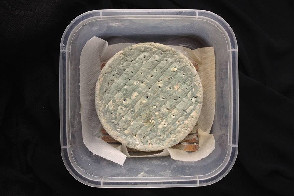 Рокфор шестинедельной выдержки в обычном пластиковом контейнере. Срок созревания этого сыра — два месяца