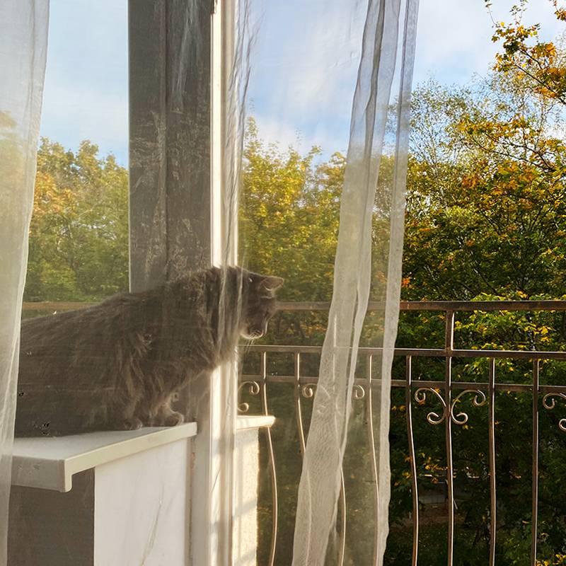 Балкон в квартире выходил на рощу, за ней — сосновый бор и море