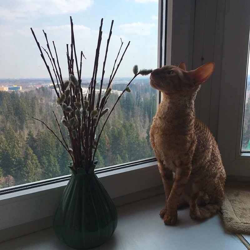 Это наш кот