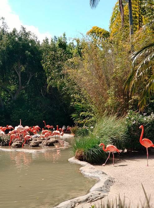 На входе всех встречают фламинго