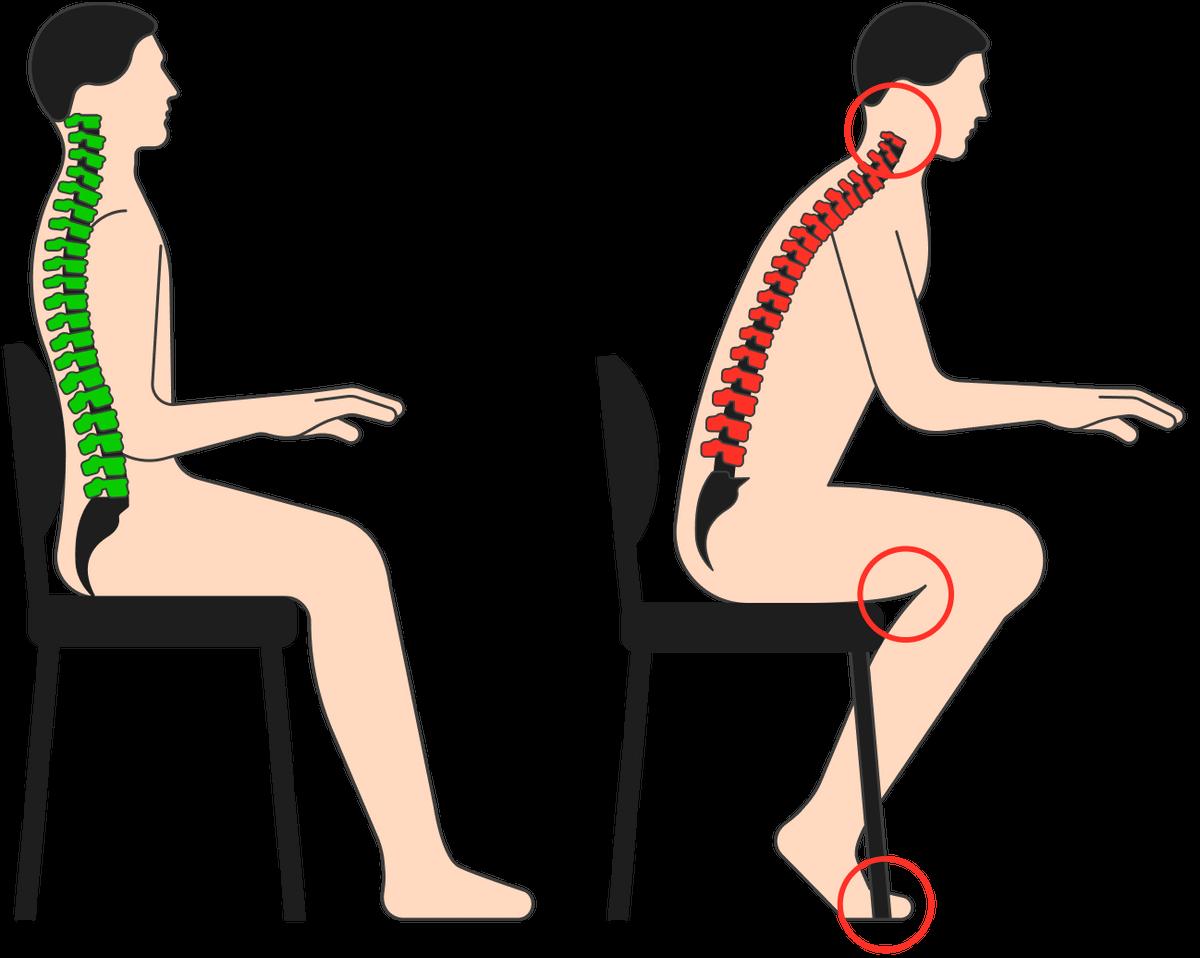 Приправильной позе сохраняются все изгибы позвоночника. Напряжение вмышцах спины есть, оно распределяется вдоль всей спины ишеи. Когда мы сутулимся, грудной ипоясничный изгибы сглаживаются, ашейный изгиб становится избыточным. Приэтом мышцы спины перенапрягаются икконцу дня будут болеть, амышцы пресса расслабляются