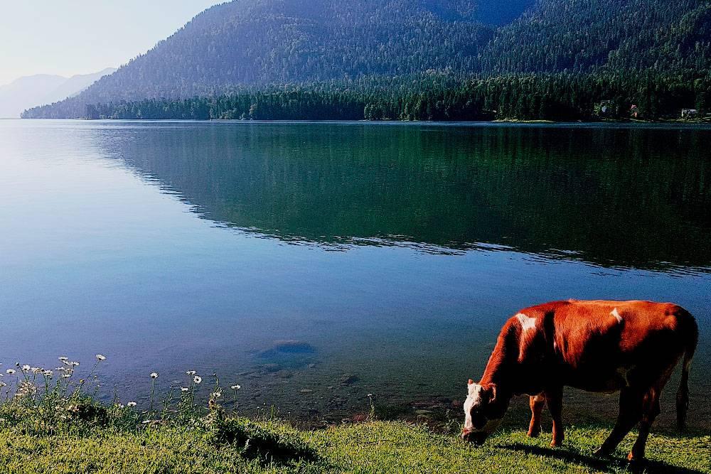 Утренний пейзаж на Телецком озере