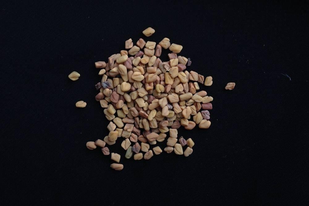 Пажитник — растение семейства бобовых, которое придает сыру характерный ореховый привкус. Перед использованием его нужно размягчить в кипятке и высушить, а затем насыпать в формы с сырным зерном