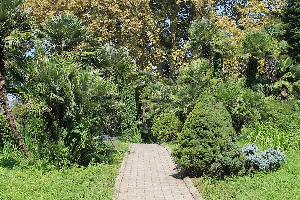 Все основные дороги в Батумском саду асфальтированы или выложены плиткой