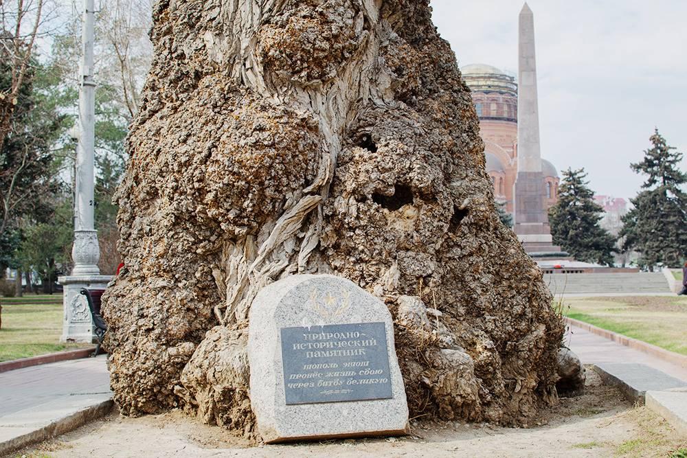 По легенде, тополь в парке пережил войну — его ствол изрезан пулями и осколками снарядов. На плите написано: «Природно-исторический памятник. Тополь этот пронес жизнь свою через битву великую». Но местные краеведы считают, что дерево посадили уже после войны