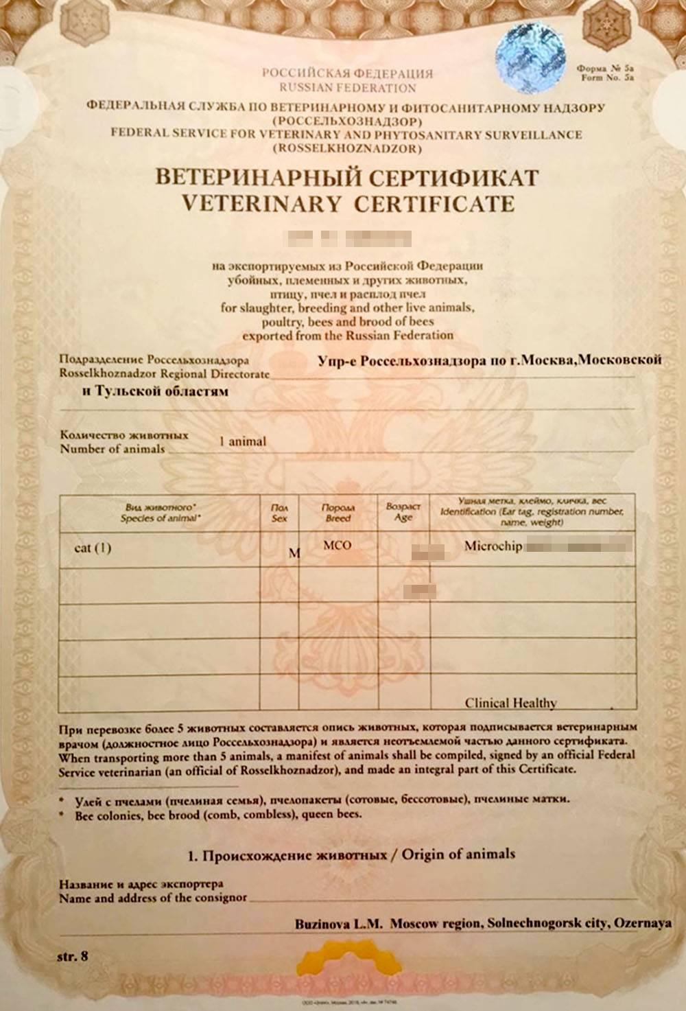 Сертификат моего кота, который куратор получил в аэропорту в обмен на записи о чипировании и прививках животного