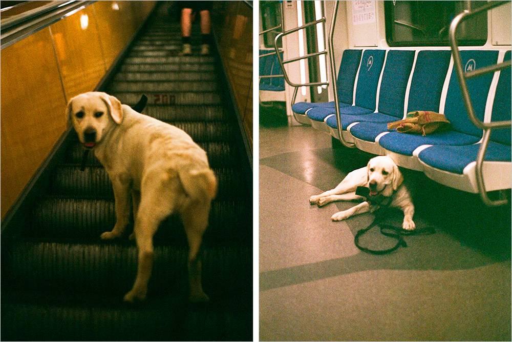В метро Марго чувствовала себя спокойно, но сходить с эскалатора боялась