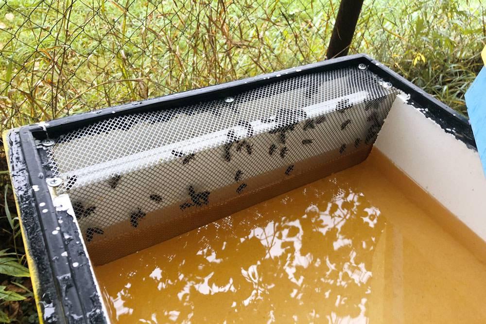 Подкормка пчел сиропом с помощью потолочной кормушки. Это надставка на улей в виде емкости. Тамже есть специальный проход дляпчел и сетка. Пчелы спускаются к сиропу, берут его и уползают. Конструкция помогает пчелам не тонуть в сиропе. Если просто налить жидкость безограничителя в виде сетки, будет множество жертв