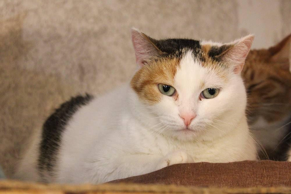 Серьезная и красивая кошка Фруся