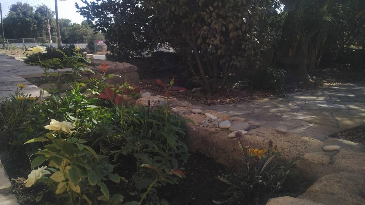 Выращиваем розы, розмарин, орегано, мяту, базилик и кипрский чай «луиза»